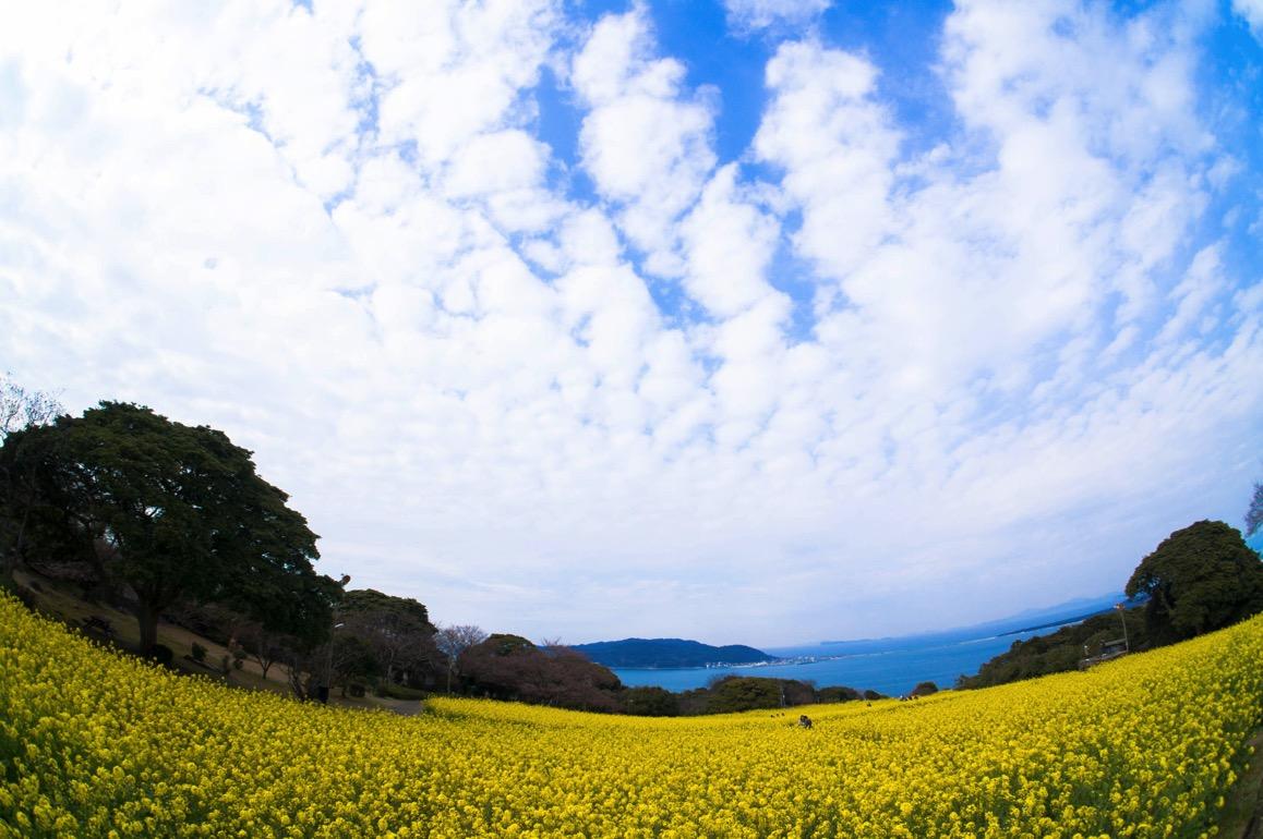 Nokonoshima 10