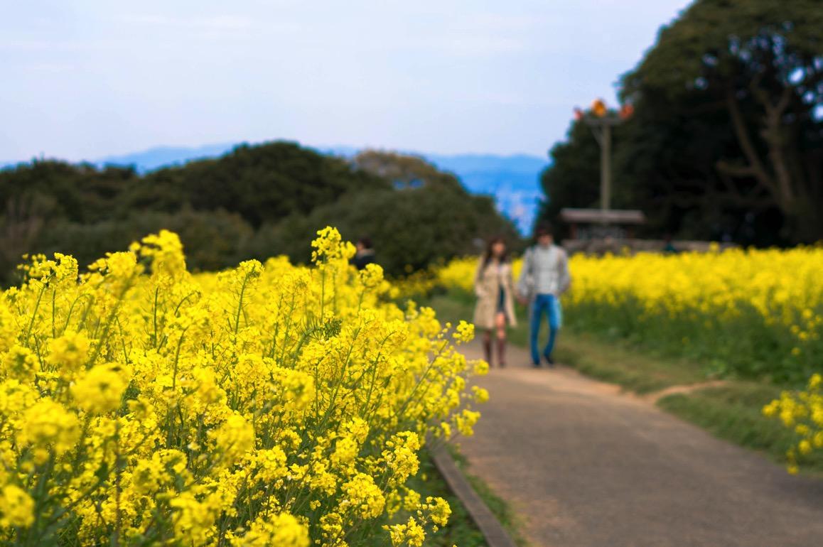 Nokonoshima 19